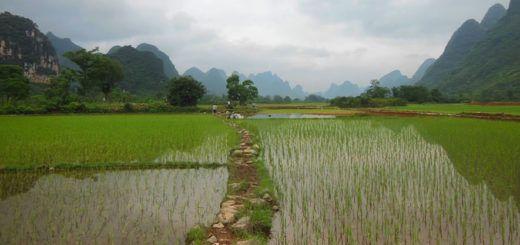 china-GMO
